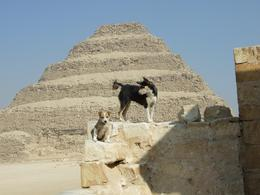 Turned around and these two dogs were on wall ruin in front of pyramid, so I took the shot. - March 2008