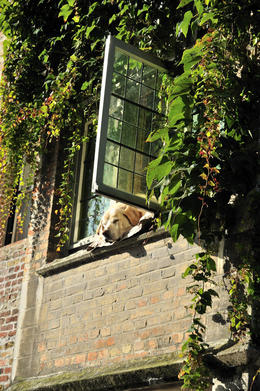 Sleeping in the sun, this beautiful dog was seen napping out the window as we passed below in the boat around Brugge. It didnt even stir an inch. , michael L - November 2013