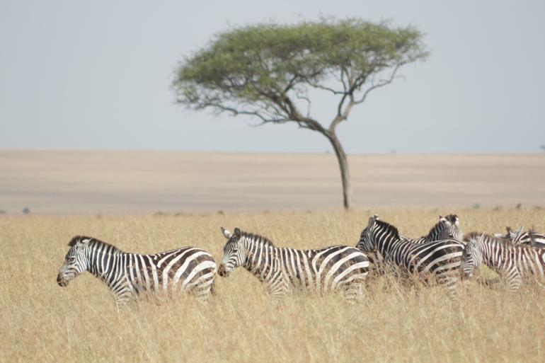 3 Days Maasai Mara Guided Safari from Nairobi
