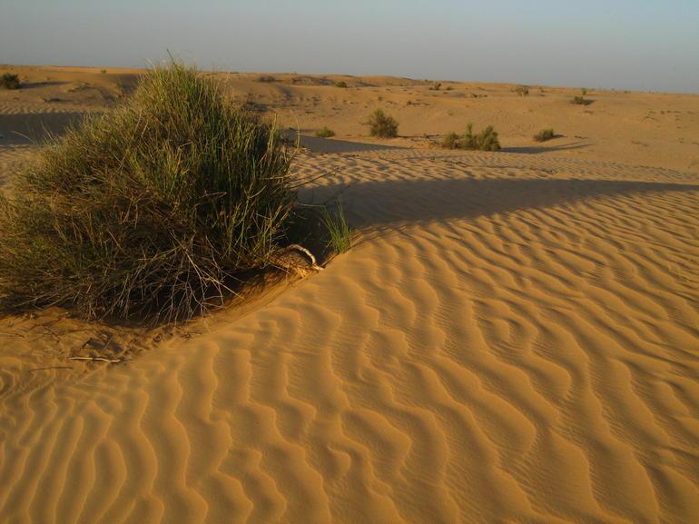 The Arabian Desert - Dubai