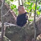 Escapada de un día al Parque Nacional Manuel Antonio desde San José, ,