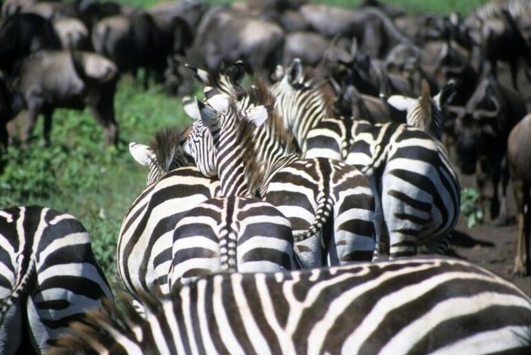 Maasai Mara National Reserve - Kenya