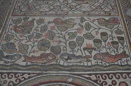 Amazing mosaic floor , Jerusalem Expert: Shmuel - February 2011