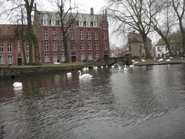 Nice Swans!, pauloaguzzoli - March 2013