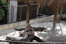 A short but sweet gator show is given after the air-boat ride. Very entertaining! , Elke S - February 2014