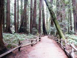 Muir Woods 1 , Gary B - November 2012