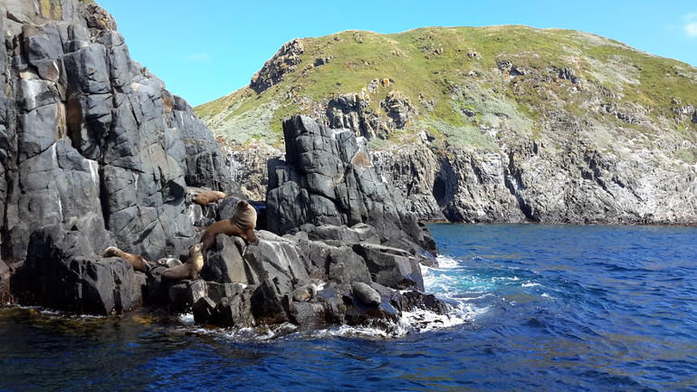 Full-Day Bruny Island Tour from Hobart
