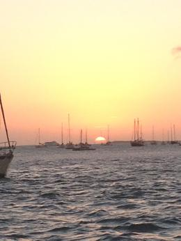 So beautiful, can't beat that Key West attitude :) , Andrea L - February 2014