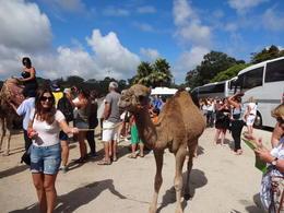 Havia muita gente e pouco espaço para os camelos andarem. , Christiane M - October 2014