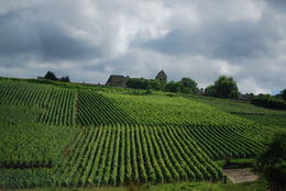 One of the many vineyards we drove be after our day of visiting 2 prominent winieries. , Jeff & Kathy - July 2012