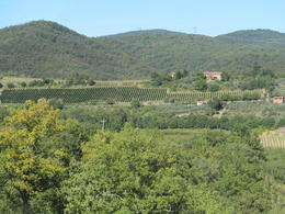 Beautiful vineyards from the castle view - note the vineyard in the shape of a wine bottle! , Karen O - October 2014
