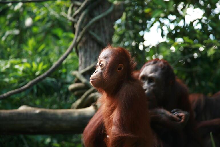 Family: Singapore Zoo -
