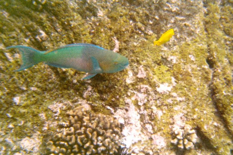 Fish in the Corral reef - Big Island of Hawaii