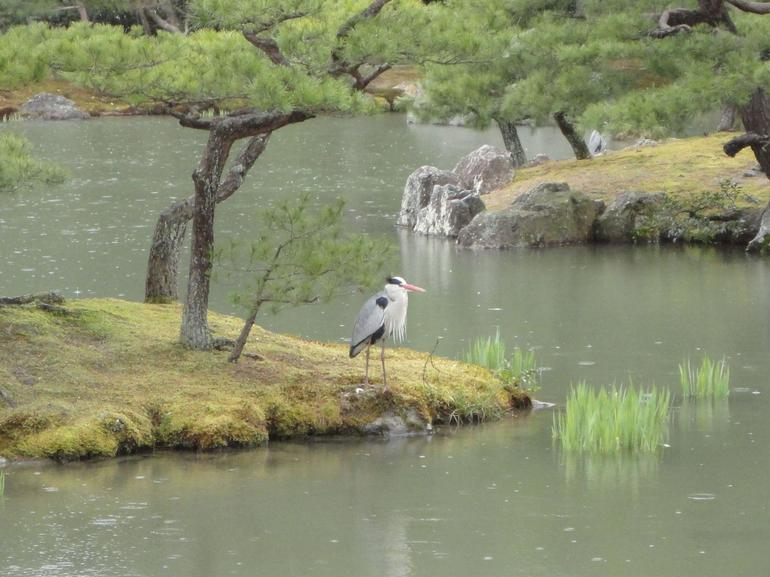 Kyoto - Osaka