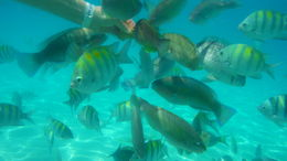Underwater picture taken on the excursion while snorkeling at Coki Beach. , Robby B - April 2015