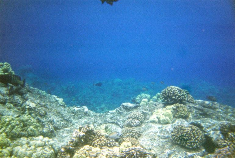 Corral Reef near Cap Cook Monument - Big Island of Hawaii