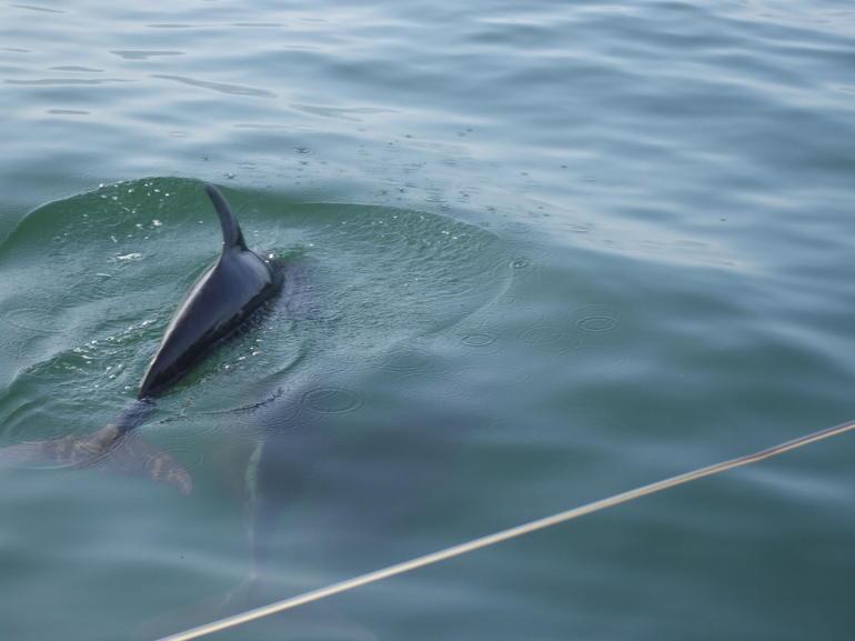 Dolphins - Puerto Vallarta