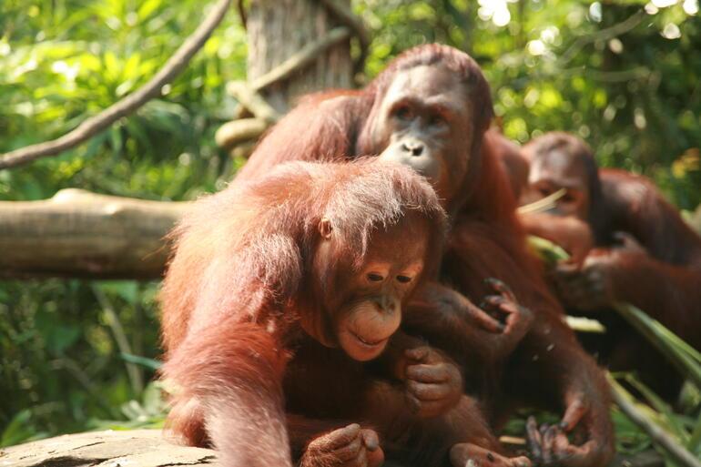 Feed me!: Singapore Zoo -