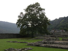 Another shot of the grounds at Tintern Abbey. , Tighthead Prop - December 2010