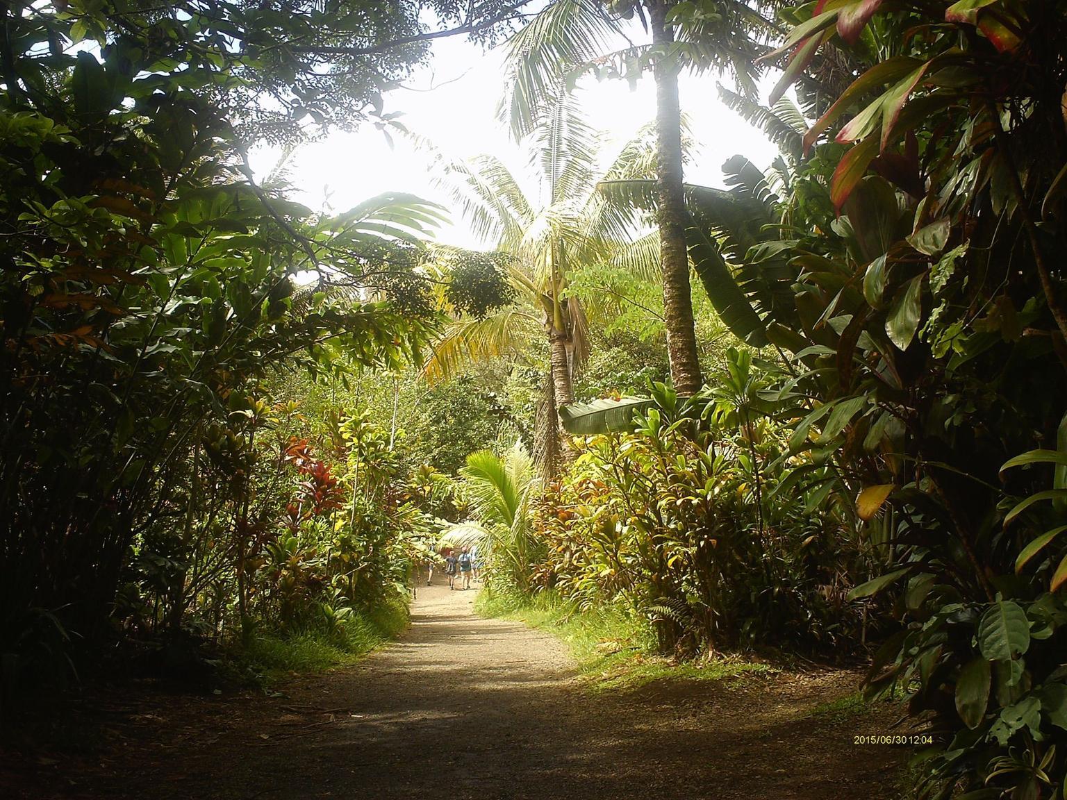 MÁS FOTOS, Al Este de las cascadas Maui y caminata por la selva.