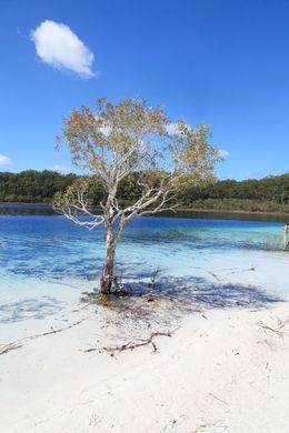 Lake McKenzie , Andrew B - October 2015