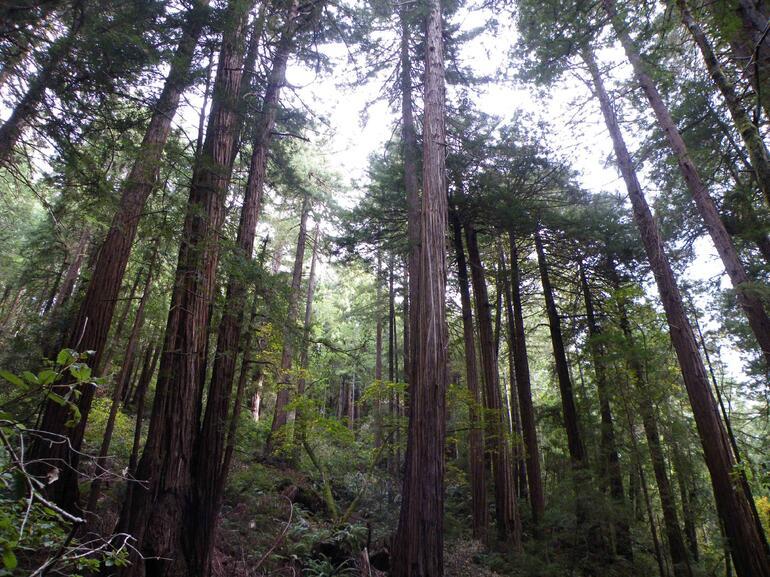 Muir Woods 3 - San Francisco