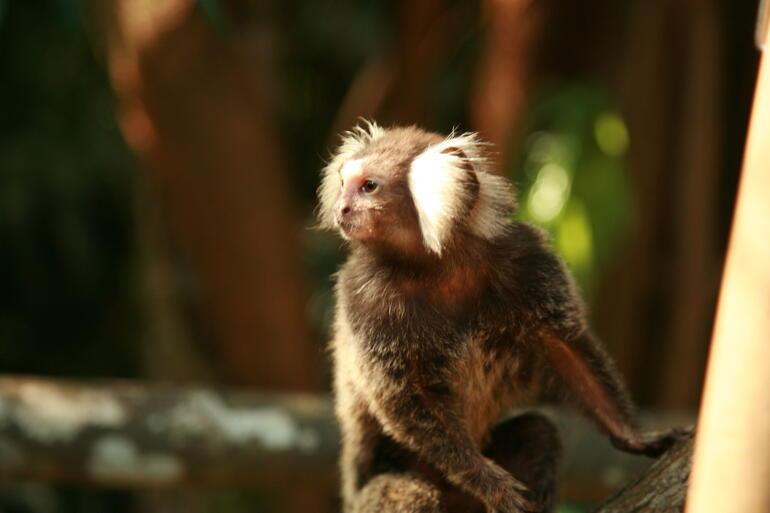 Solo: Singapore Zoo -