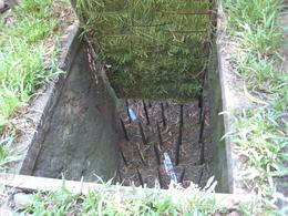 hidden under grass - December 2011
