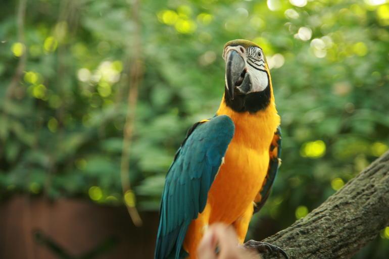 Big bird: Singapore Zoo -