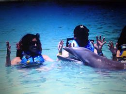 In the water with the dolphins - July 2015