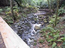 Muir Woods 4 , Gary B - November 2012
