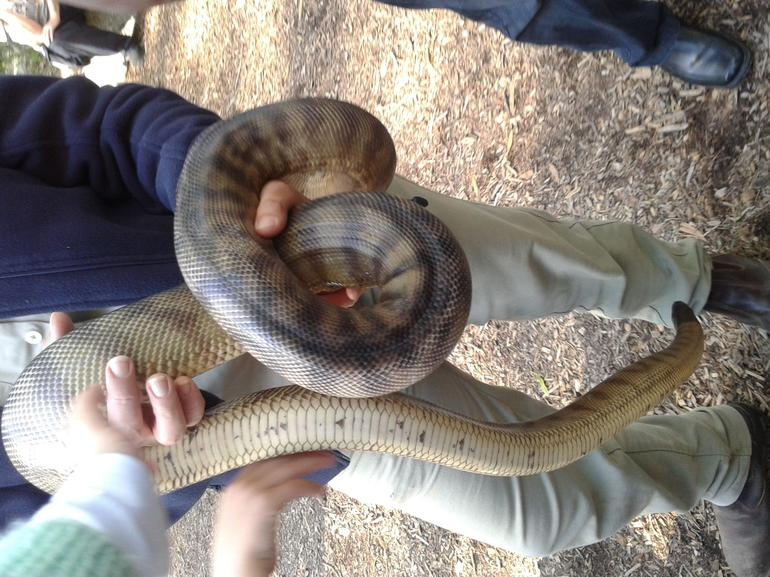 Puffing Billy Steam Train & Healesville Wildlife Sanctuary Tour From Melbourne photo 14