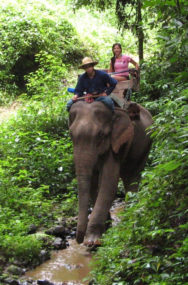 Elephant Trek Chiang Mai - Chiang Mai