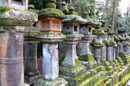 Kasuga Grand Shrine - March 2013