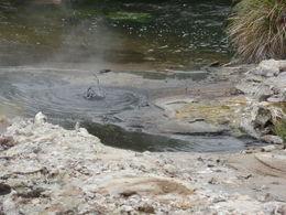 Mud pools at Te Puia , stallingfamily - December 2015