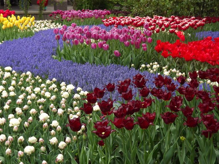 Amazing Flowers - Amsterdam