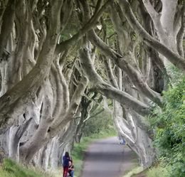 Dark Hedges-background for a Game of Thrones shot , Joseph L - August 2015