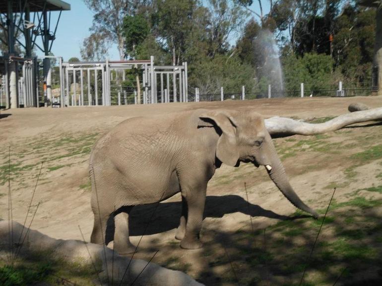 Elephant Odyssey - San Diego