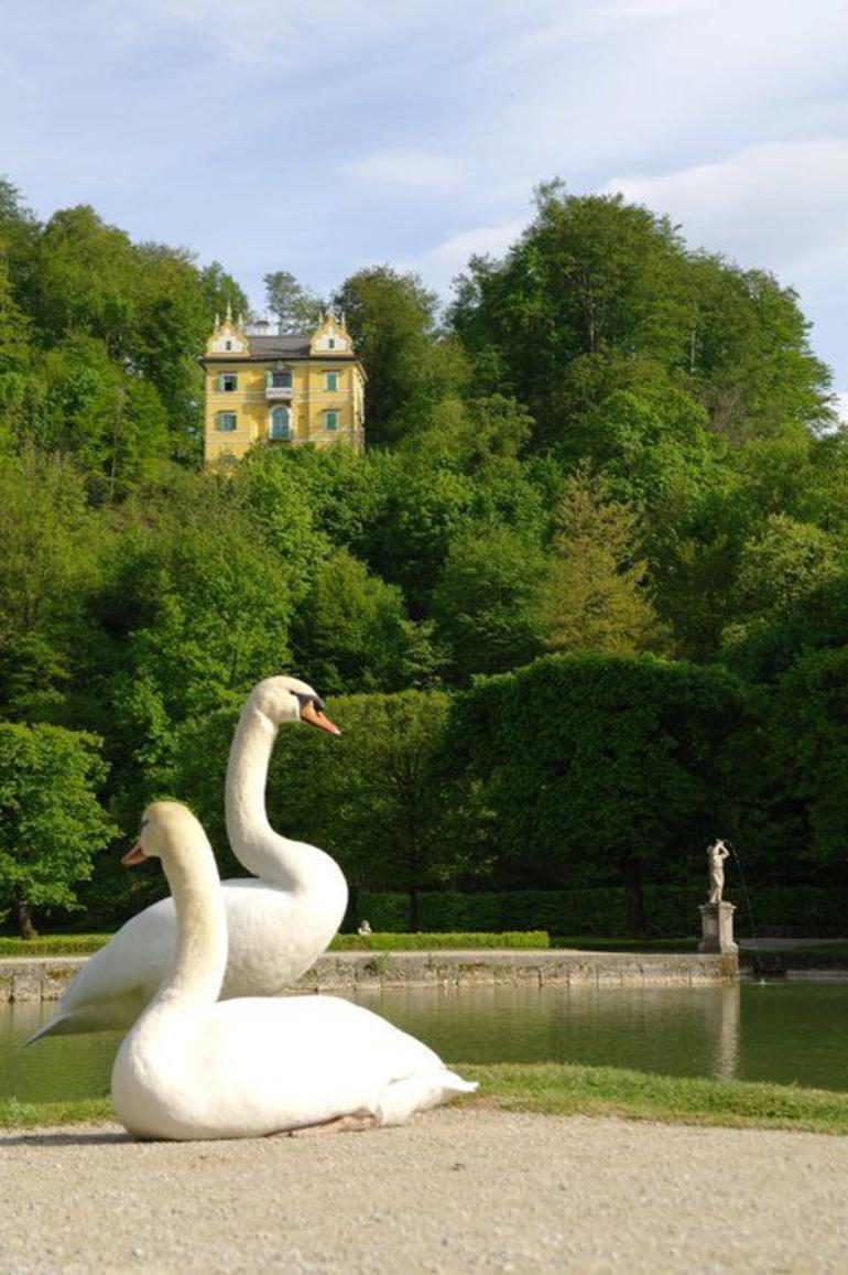 Salzburg City Tour - Vienna
