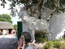 Puck Goat for the Puck Fair , Marina G - July 2013