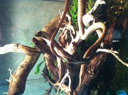 Which one is the snake and which one is the branch?, Saké - May 2011