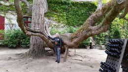 Árvore linda! , Maria Ilydia N - October 2015