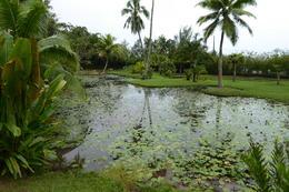 Vaipahi Gardens , Neville B - October 2017