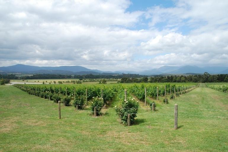 Yarra Valley Wine Tasting: Domaine Chandon view -