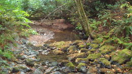 Muir Woods , itz - October 2012