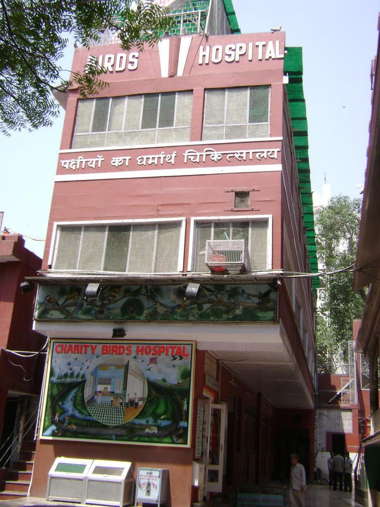 Bird Hospital Delhi - New Delhi