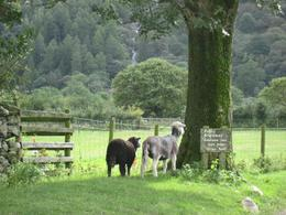 In the village of Buttermere - September 2009