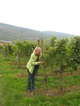 The beautiful white grapes were everywhere., Gwenn B - October 2010