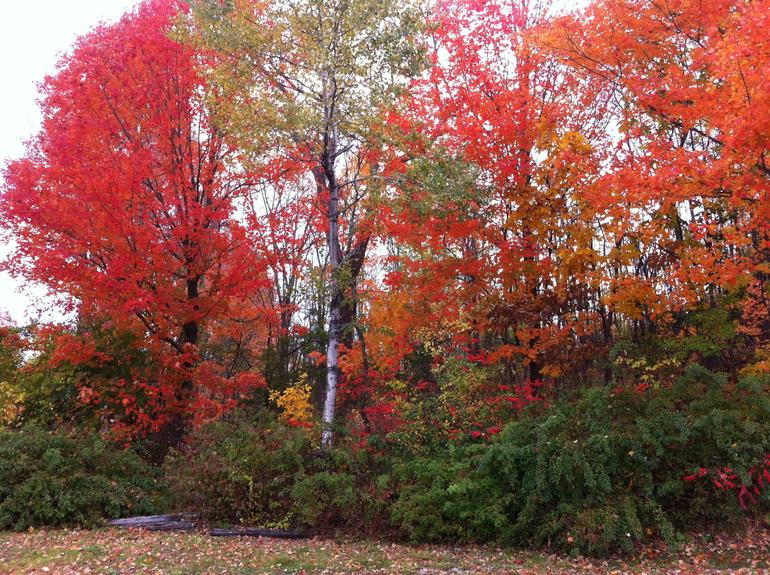 Autumn in New England: Fall Foliage Sightseeing Day-Trip with Lunch from Boston photo 37