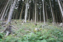 From the tour bus, how tall are these trees? , Cathy J - September 2015